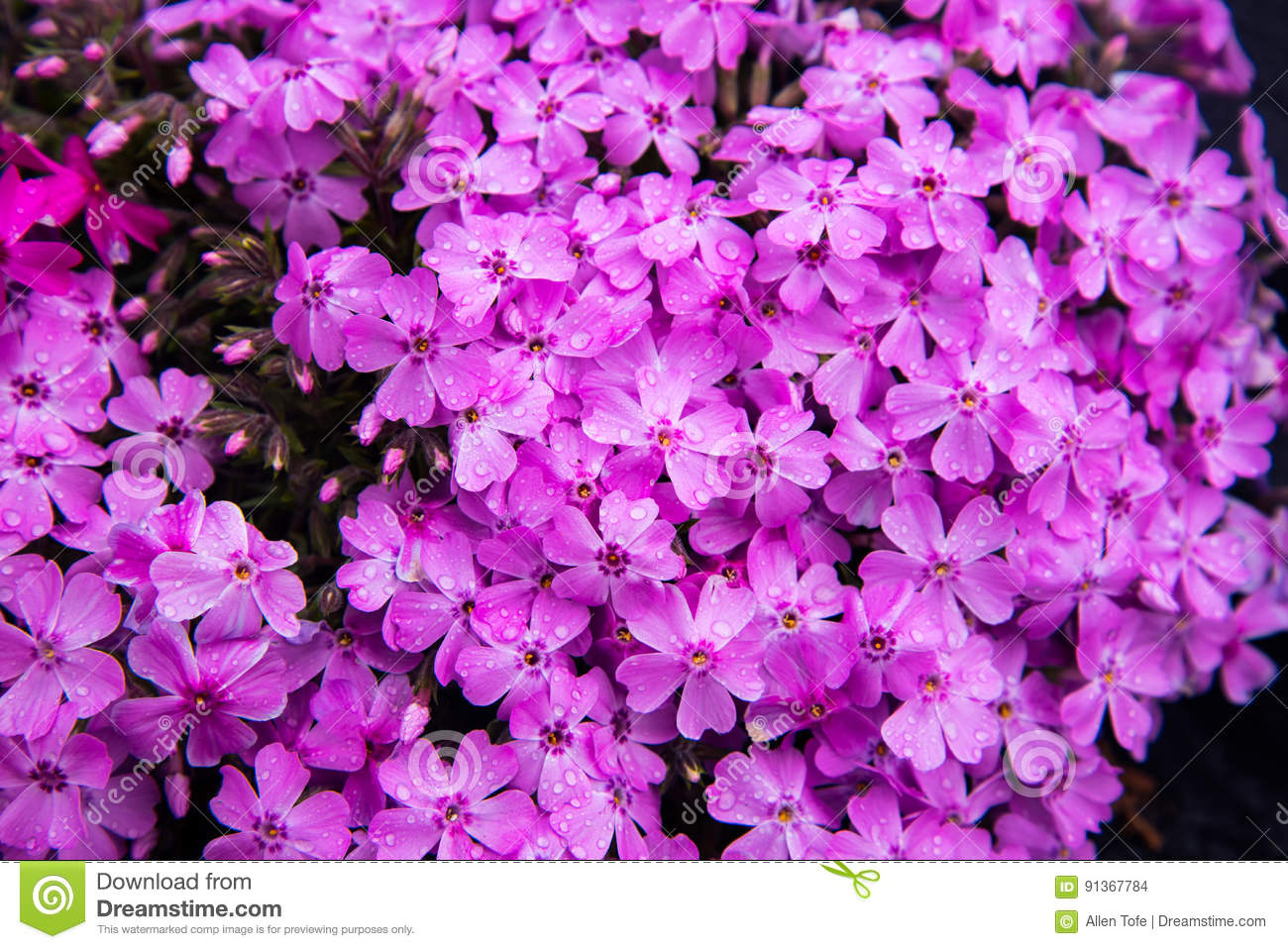 Beautiful Spring Flowers In Japan Stock Photo Image Of Character