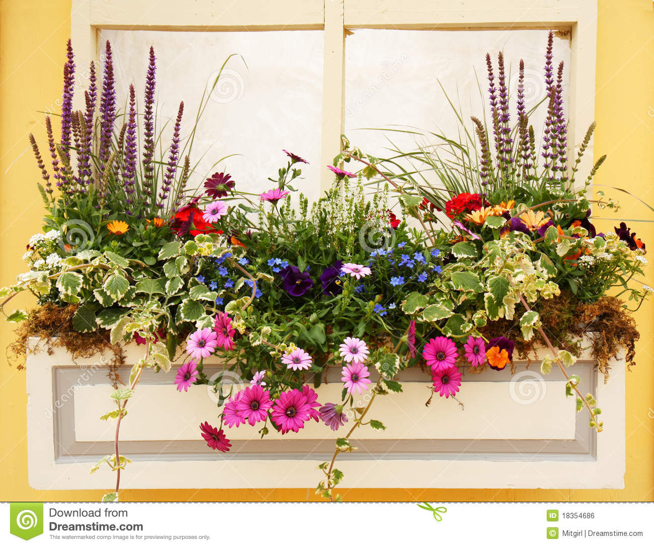 Beautiful Spring Flowers And Leaves Planter Stock Photo Image Of