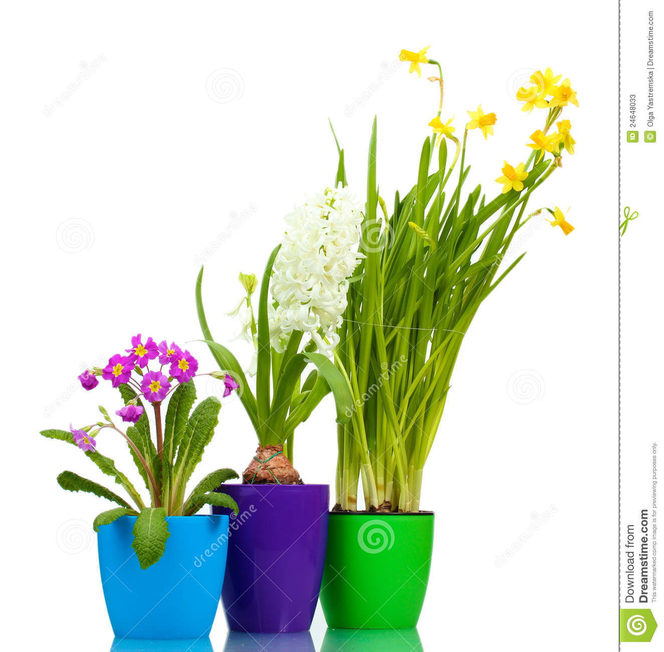 Pictures of Beautiful Flower Pots http://www.dreamstime.com/stock-photos-beautiful-spring-flowers-pots-image24648033