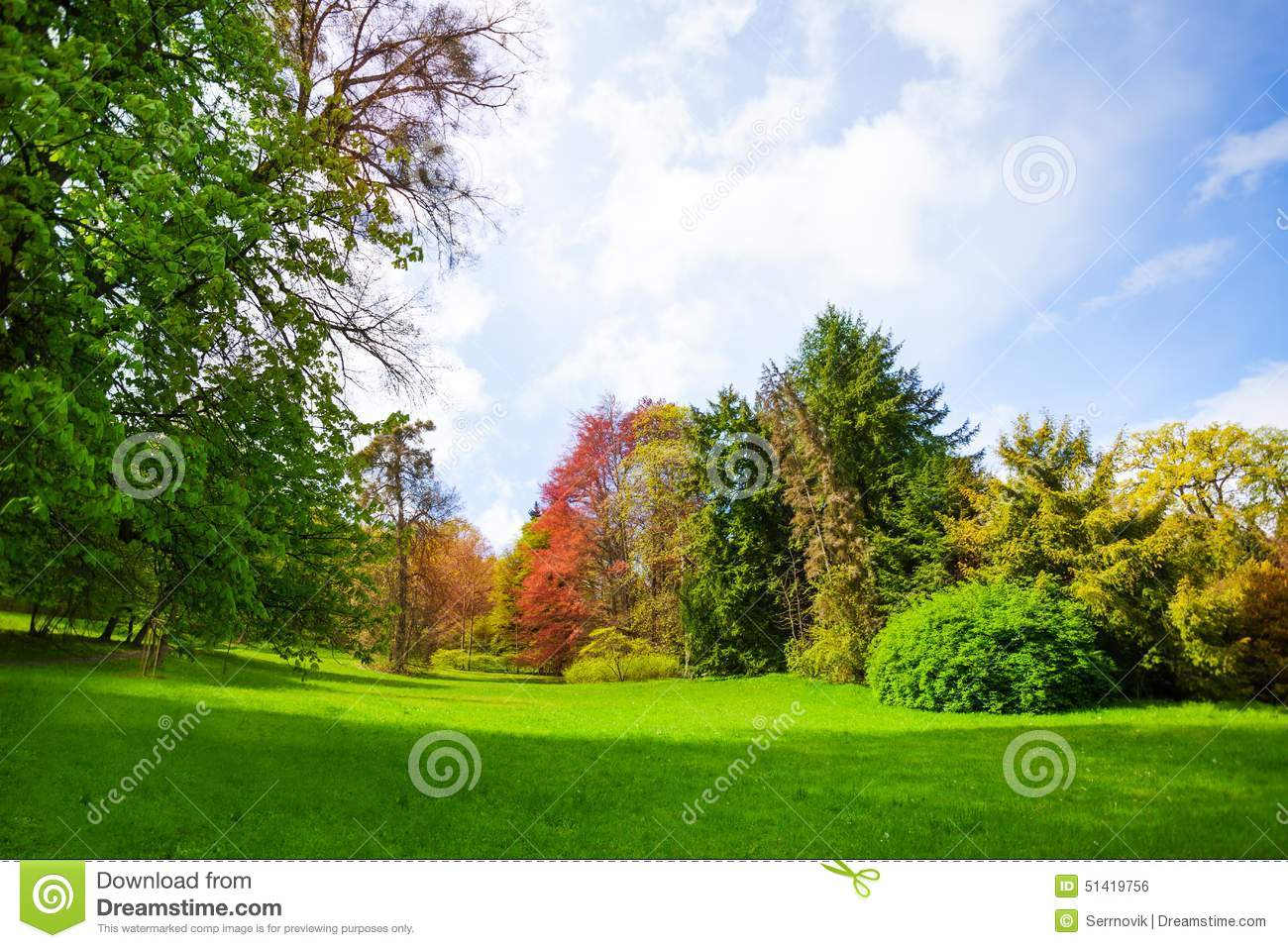 Beautiful Spring Forest With Trees Of All Colors Stock Photo - Image ...