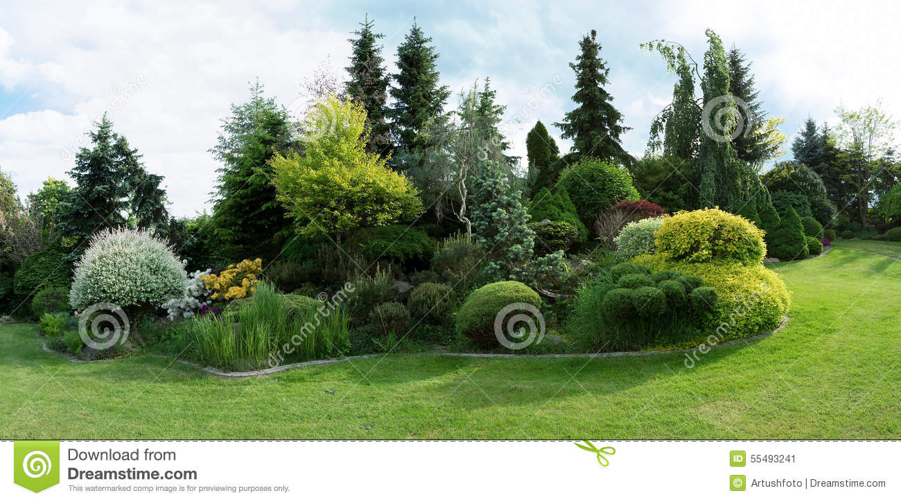 beautiful conifer design garden grass green spring trees