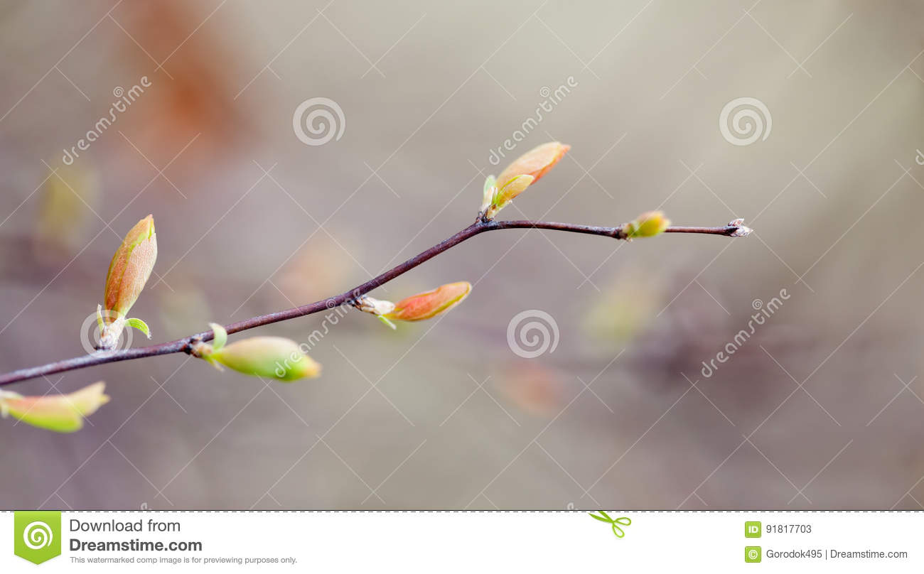 Beautiful spring nature landscape, tree twig with colorful red green leaves. Macro view selective focus.