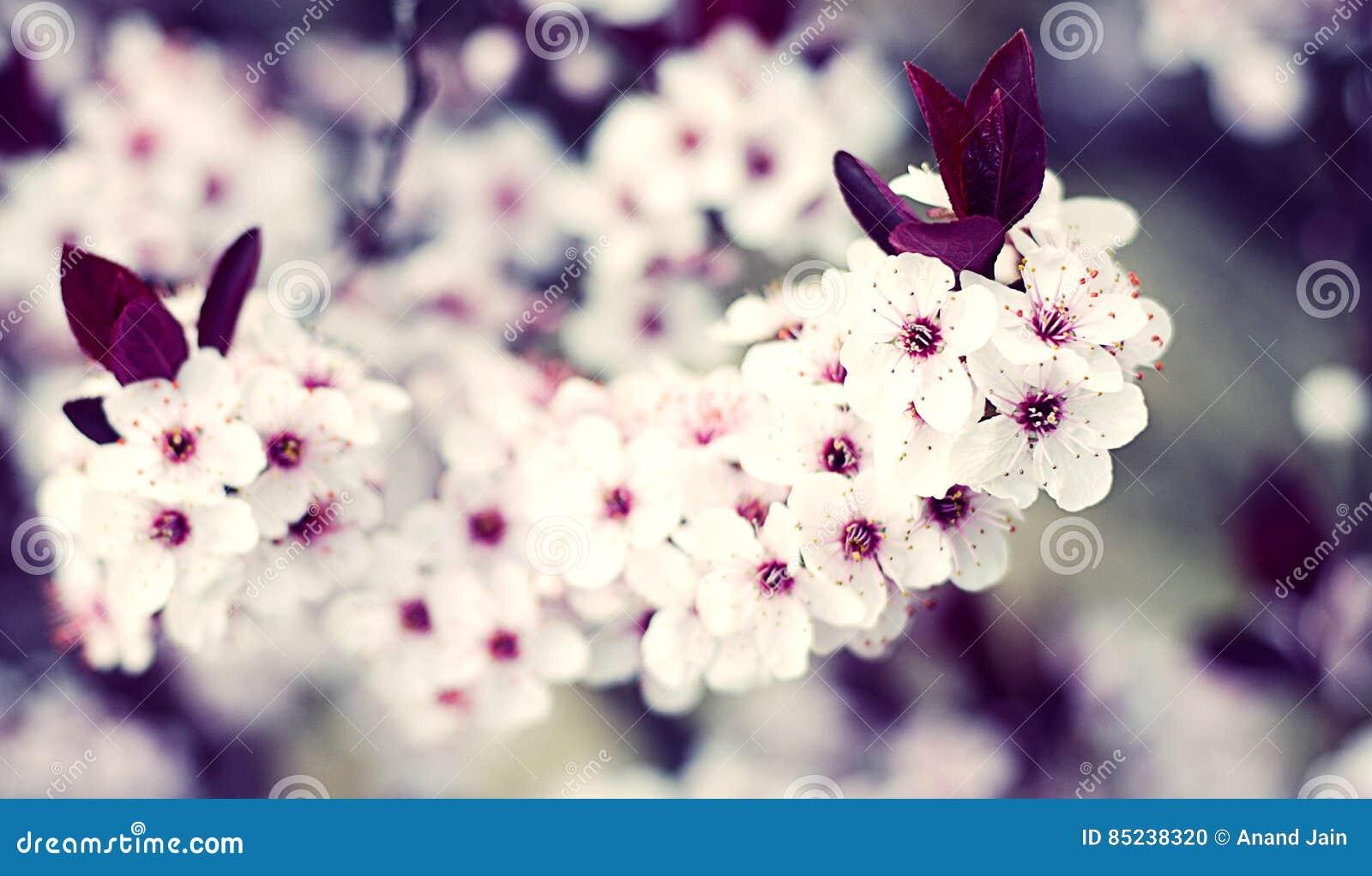 Download Beautiful Spring stock photo. Image of garden, pair, bunch - 85238320