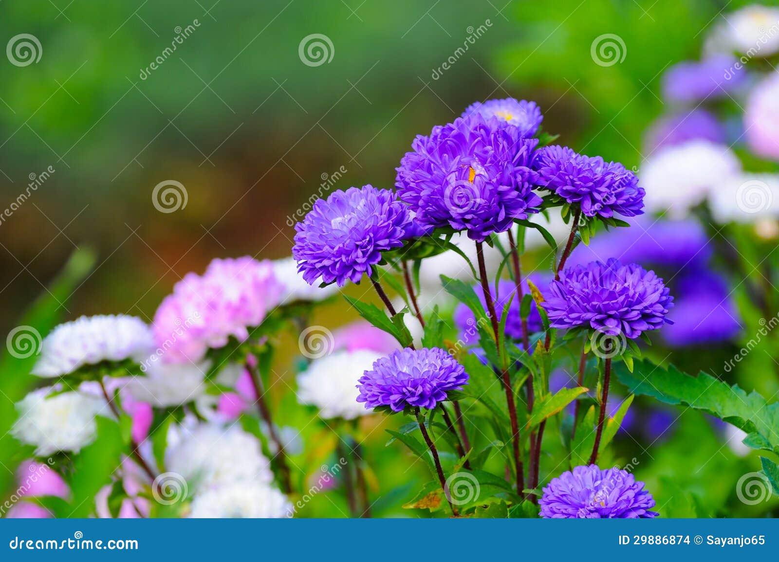 Beautiful spring flowers stock photo image of season 29886874 beautiful spring flowers mightylinksfo Gallery