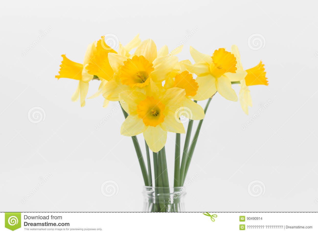 Beautiful spring yellow flowers daffodils on a white background beautiful spring yellow flowers daffodils on a white background mightylinksfo
