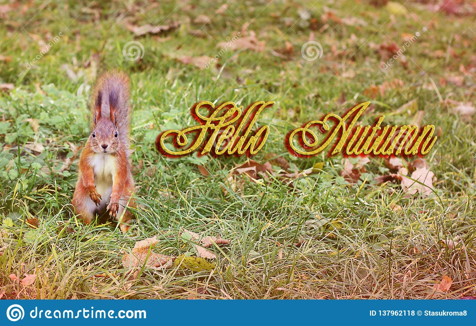 Beautiful squirrel in the yellow leaves. Red squirrel. Beautiful autumn. Hello winter. Spring