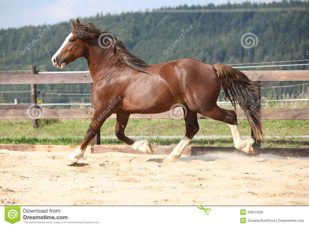 long manes stock photos - photo #18