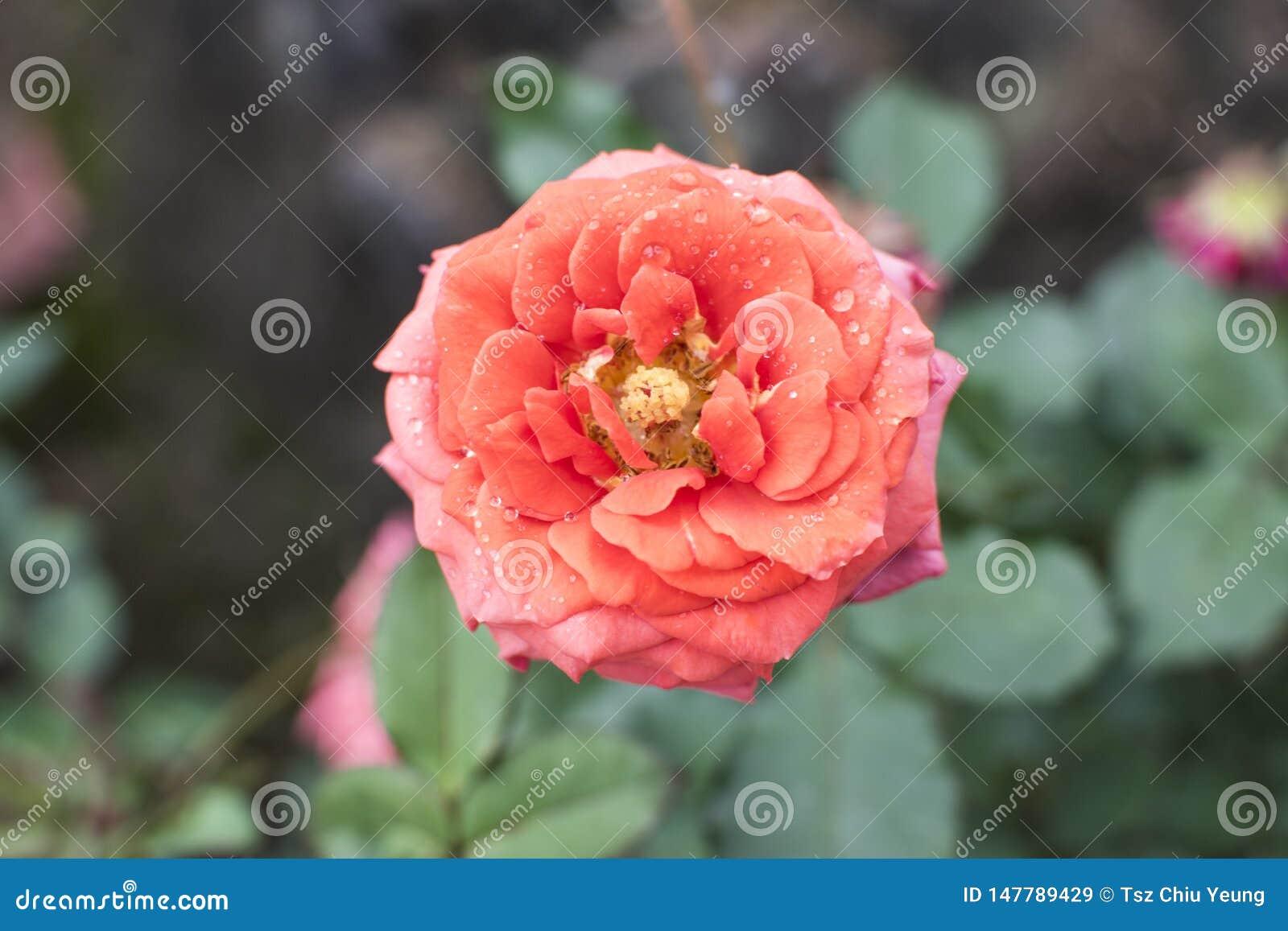 Beautiful stand alone pink flower