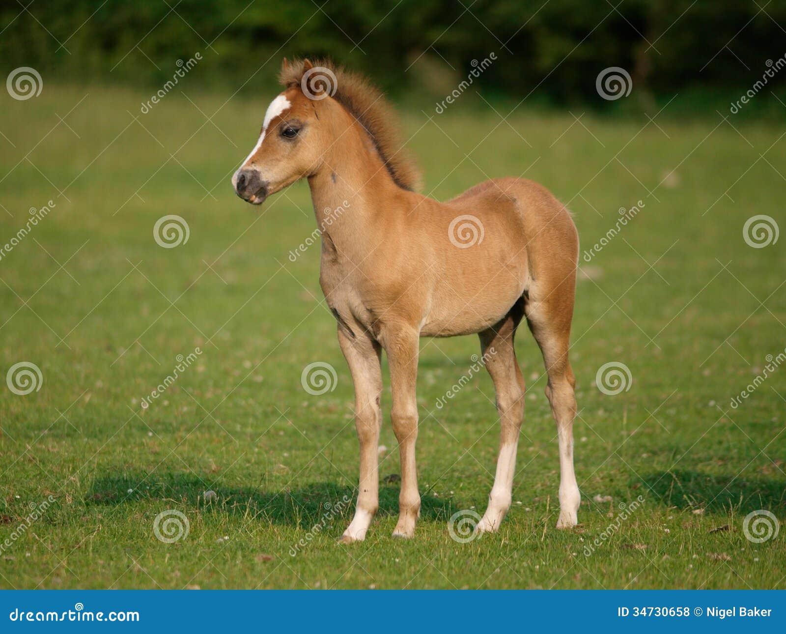 Newborn horse standing - photo#7