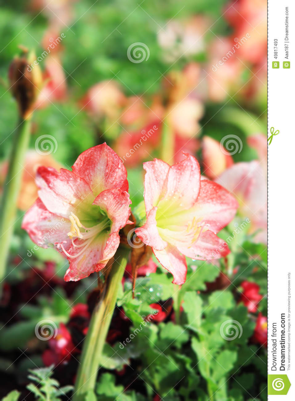 Natural Images In Flower