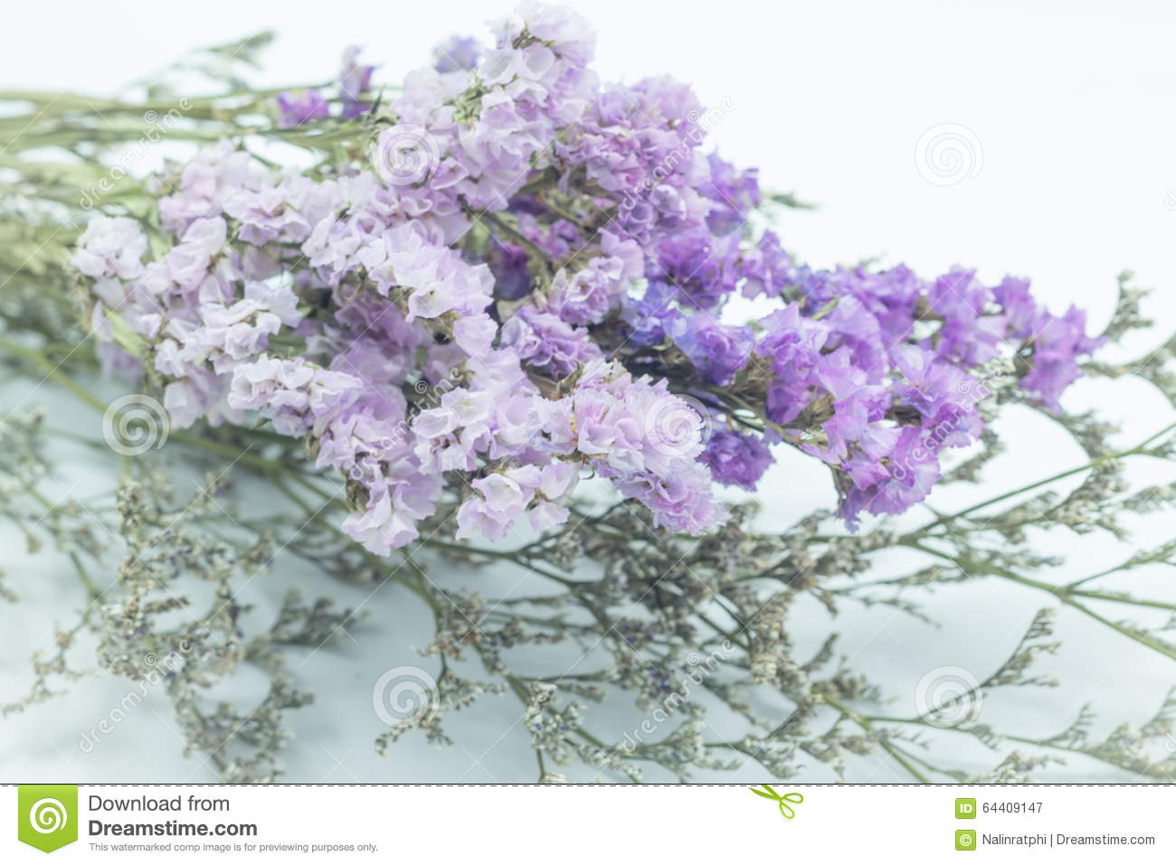Beautiful Statice Flower Bouquet On White Background Stock Image