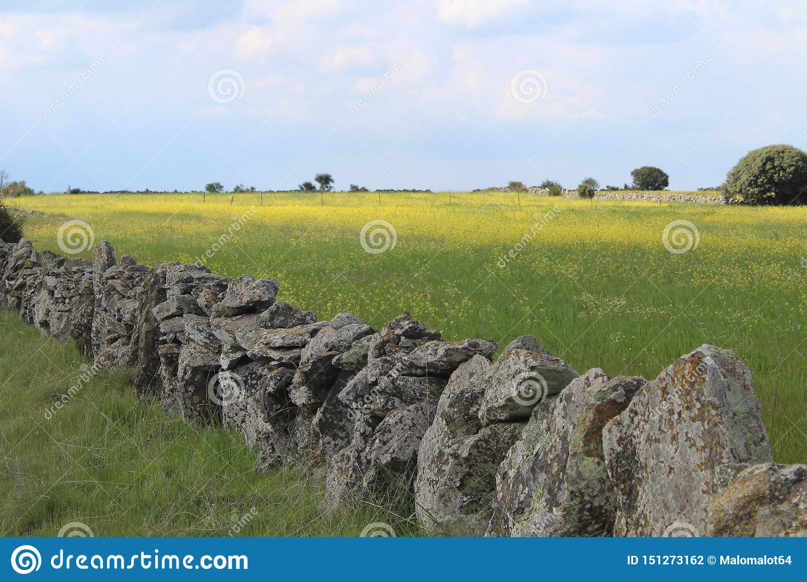 Beautiful stone wall that separates the fields and animals