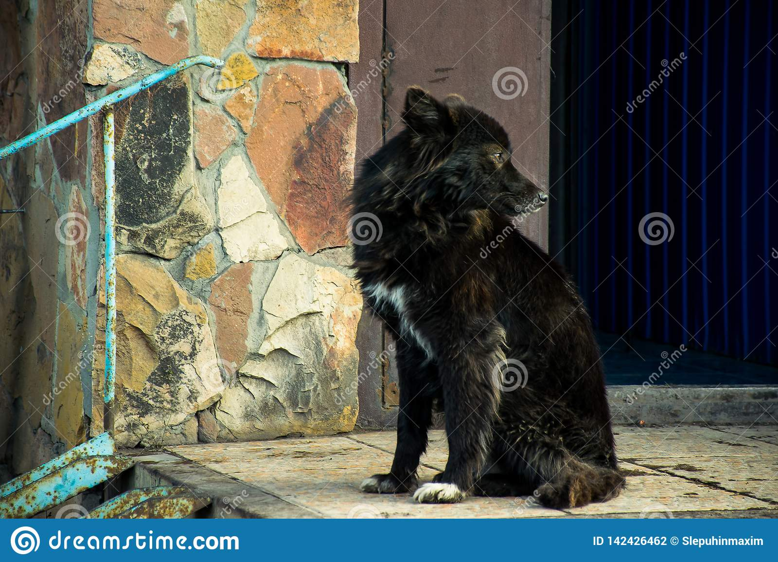 Beautiful black dog by the stone wall