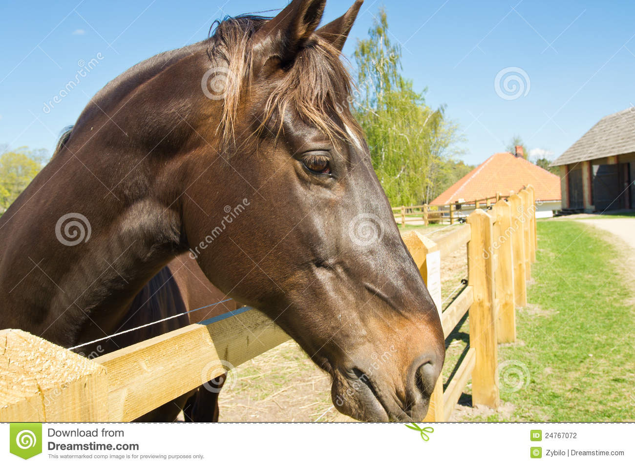 Beautiful and strong horse
