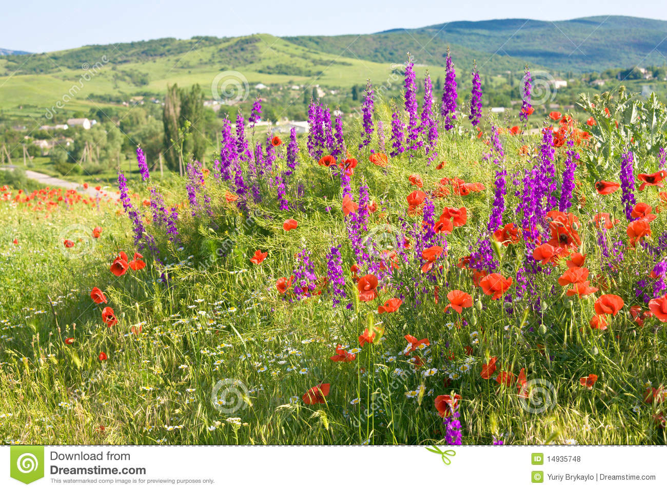 Spring Mountain Landscape Flowers Purple Colored Hills: Beautiful Summer Country Landscape With Flowers . Stock