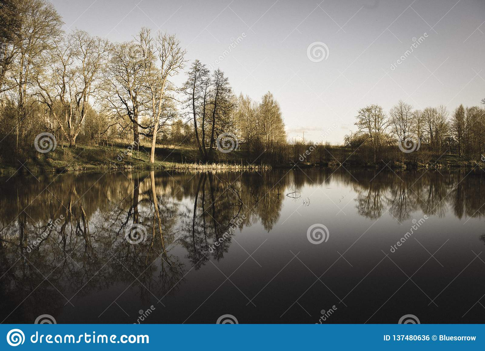 Beautiful summer day at the lake, tree reflections in blue water - vintage retro look. Beautiful summer day at the lake, tree reflections in blue water with blue royalty free stock image