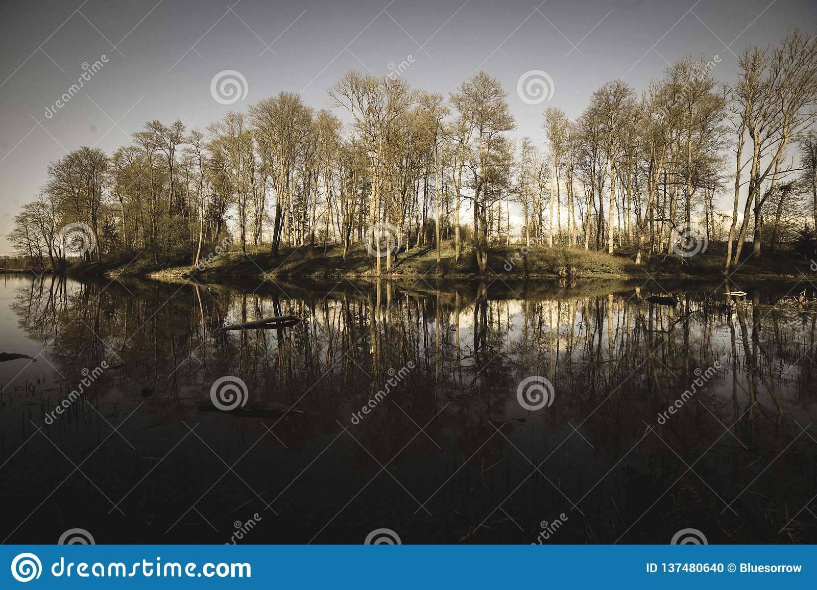 Beautiful summer day at the lake, tree reflections in blue water - vintage retro look. Beautiful summer day at the lake, tree reflections in blue water with blue stock photo