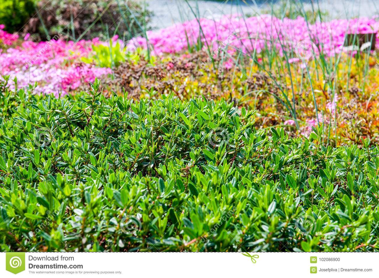 Beautiful Summer Flower Plant Stock Photo Image Of Blooming