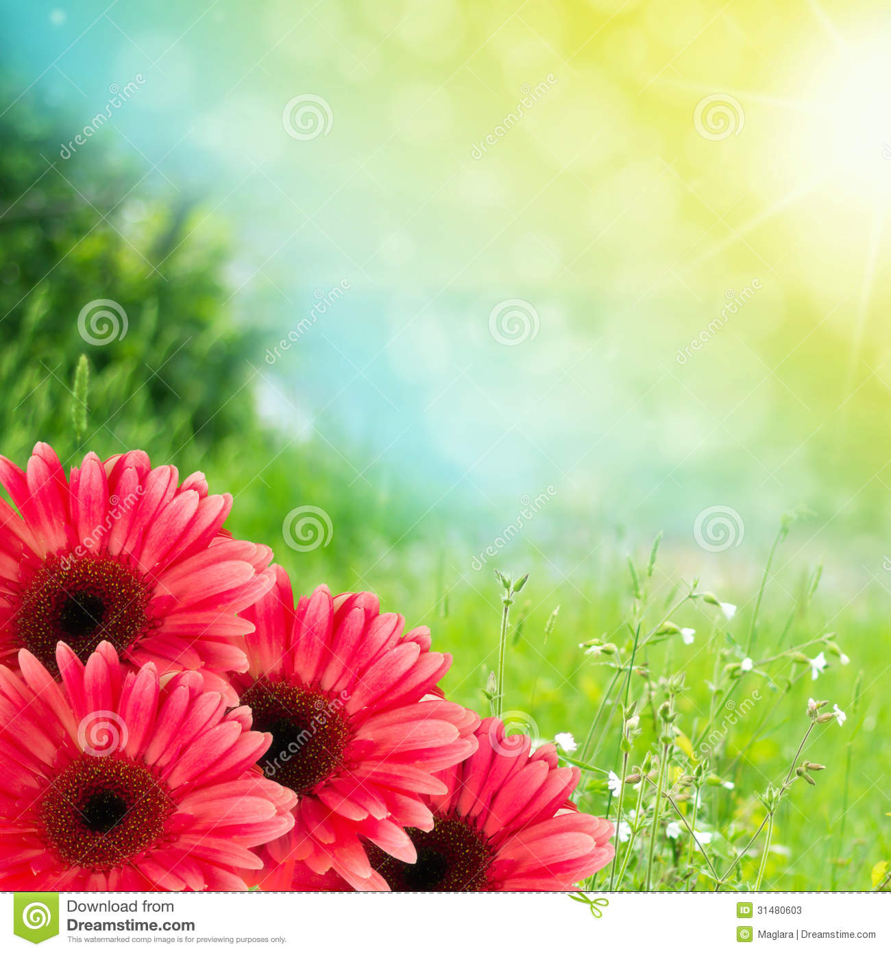 Beautiful Summer Flowers Background Stock Image Image Of Gerbera