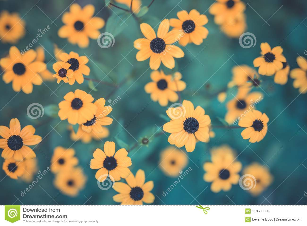 Summer flowers banner. Yellow flowers under sunlight, happy moody blooming close-up