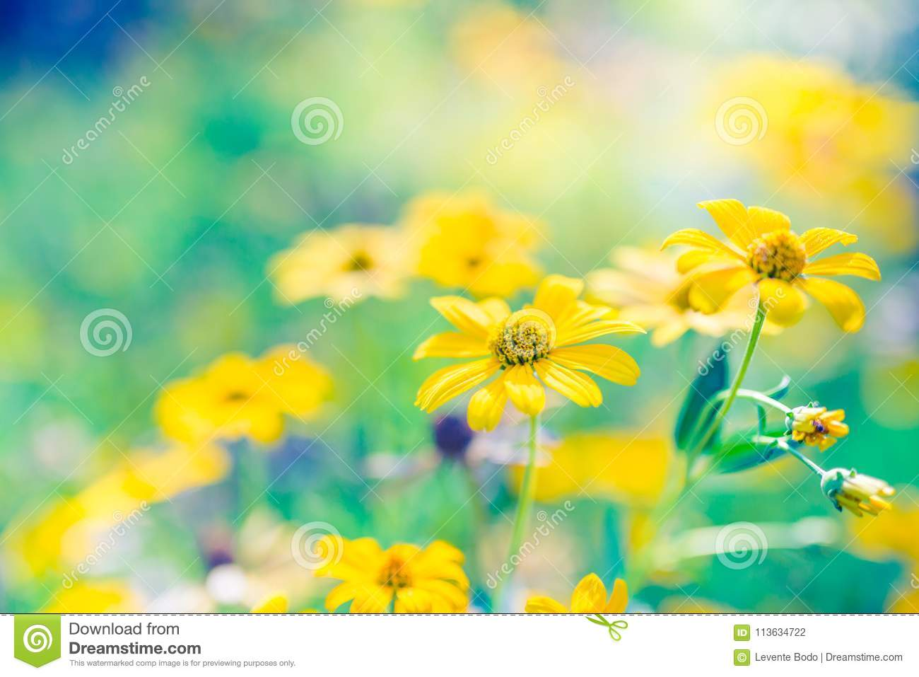 Beautiful Summer Landscape With Blossoming Meadow And Flowers Wild