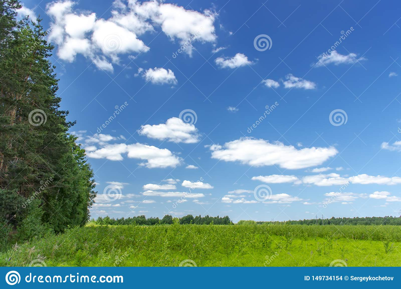 Beautiful summer landscape with green grass and blue sky with white clouds