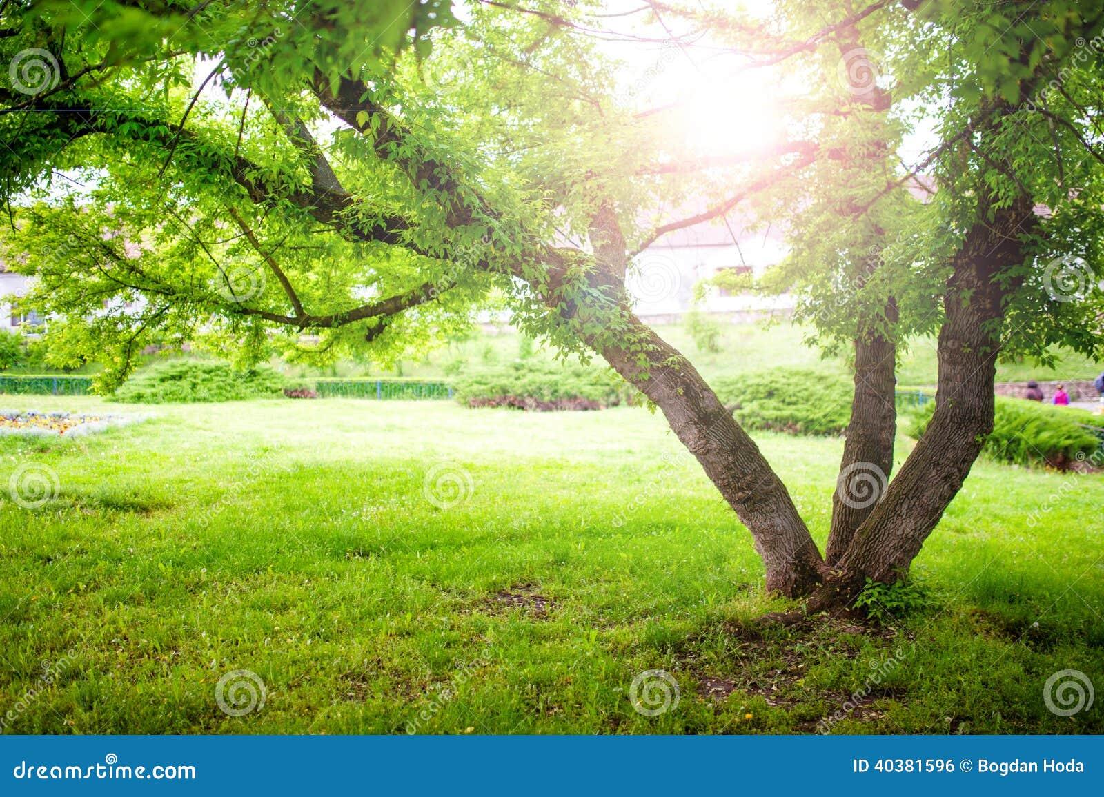 Beautiful Green Nature Park Scenery Wallpaper