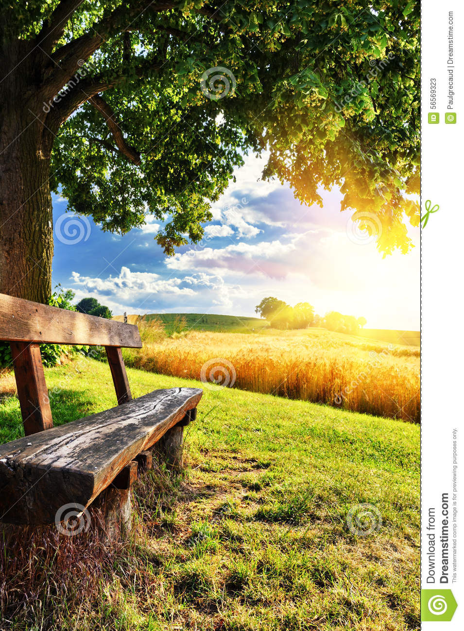 Beautiful Summer Landscape With Wooden Bench Stock Photo ...