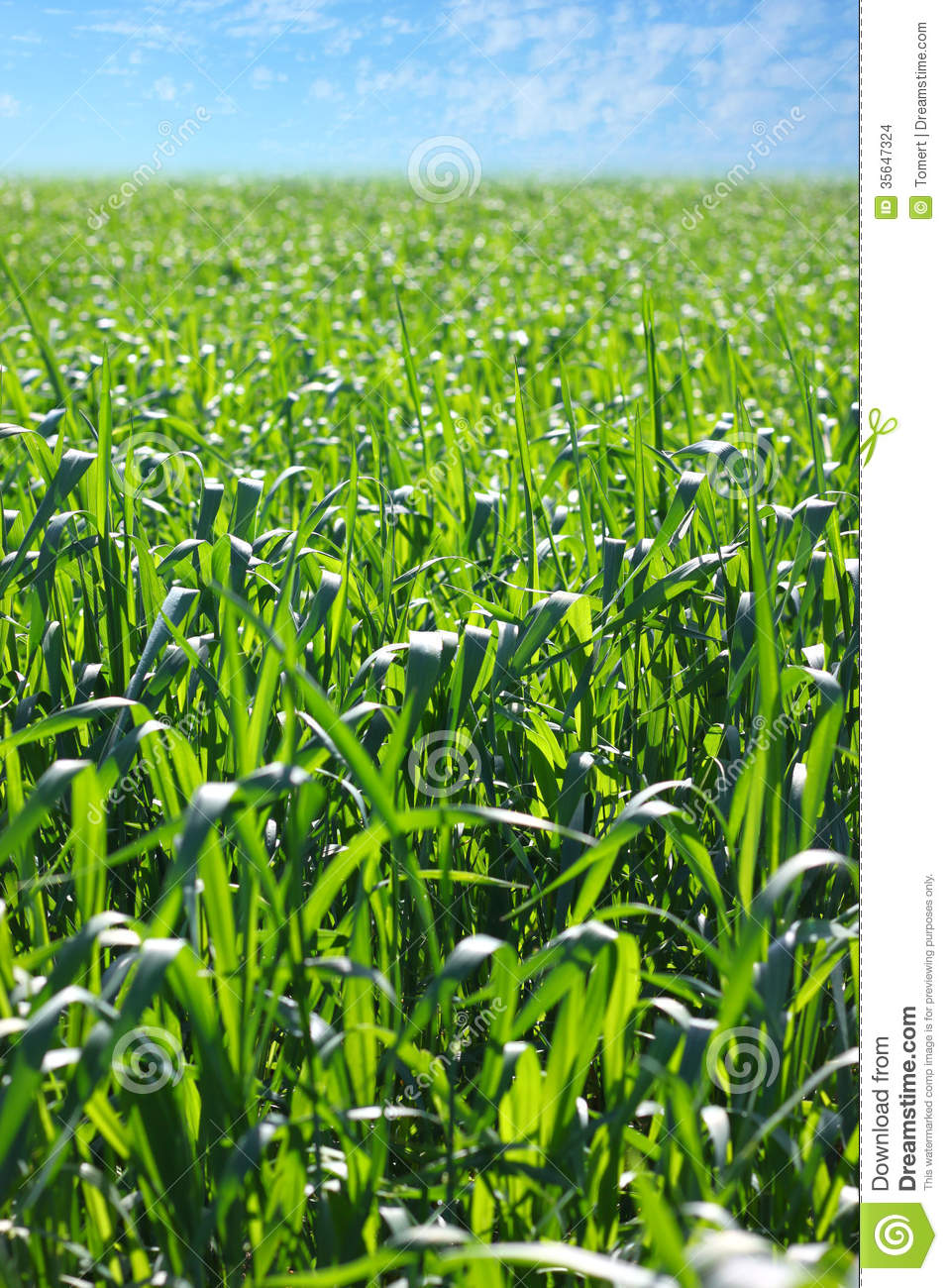 Beautiful Summer Or Spring Landscape Of Field Of Crops