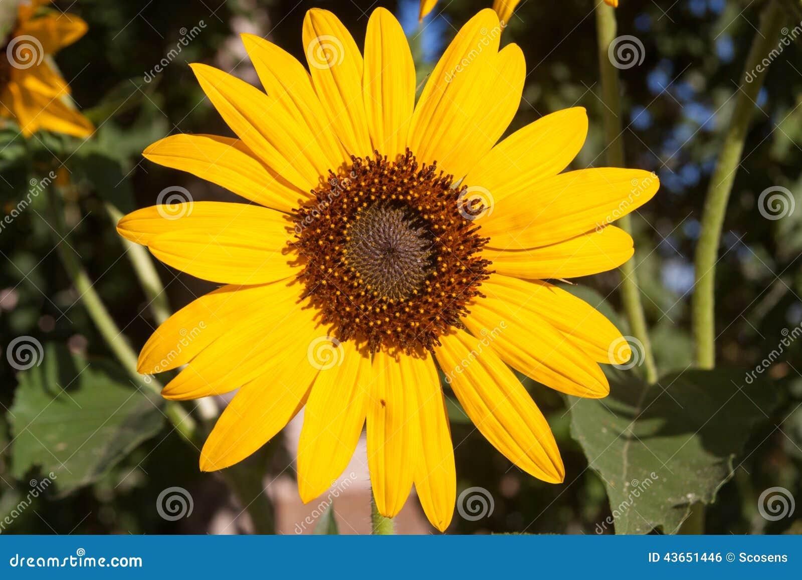 single women in sunflower Sunflowerinlove - single woman seeking match in paintsville, kentucky, united states 26 yo zodiac sign: taurus contact kentucky woman sunflowerinlove for online relations my name is.