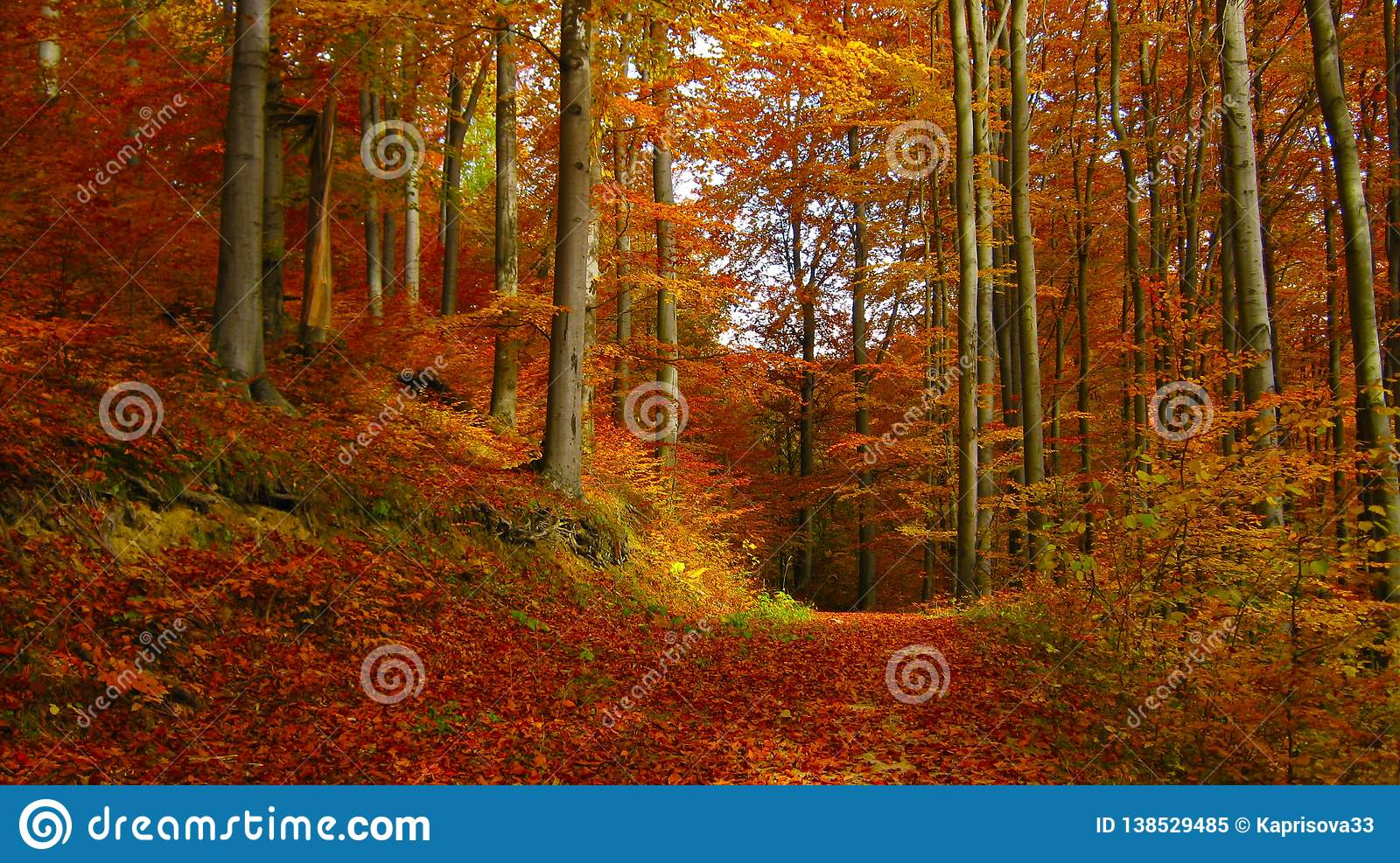 Beautiful sunny day in the autumn golden forest