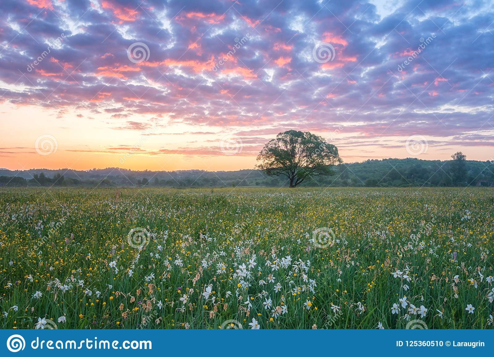 Beautiful sunrise in the flowering valley, scenic landscape with wild growing flowers and color cloudy sky