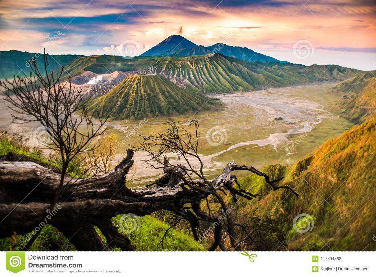 Beautiful sunrise viewpoint with a tree Mount Bromo, East Java, Indonesia