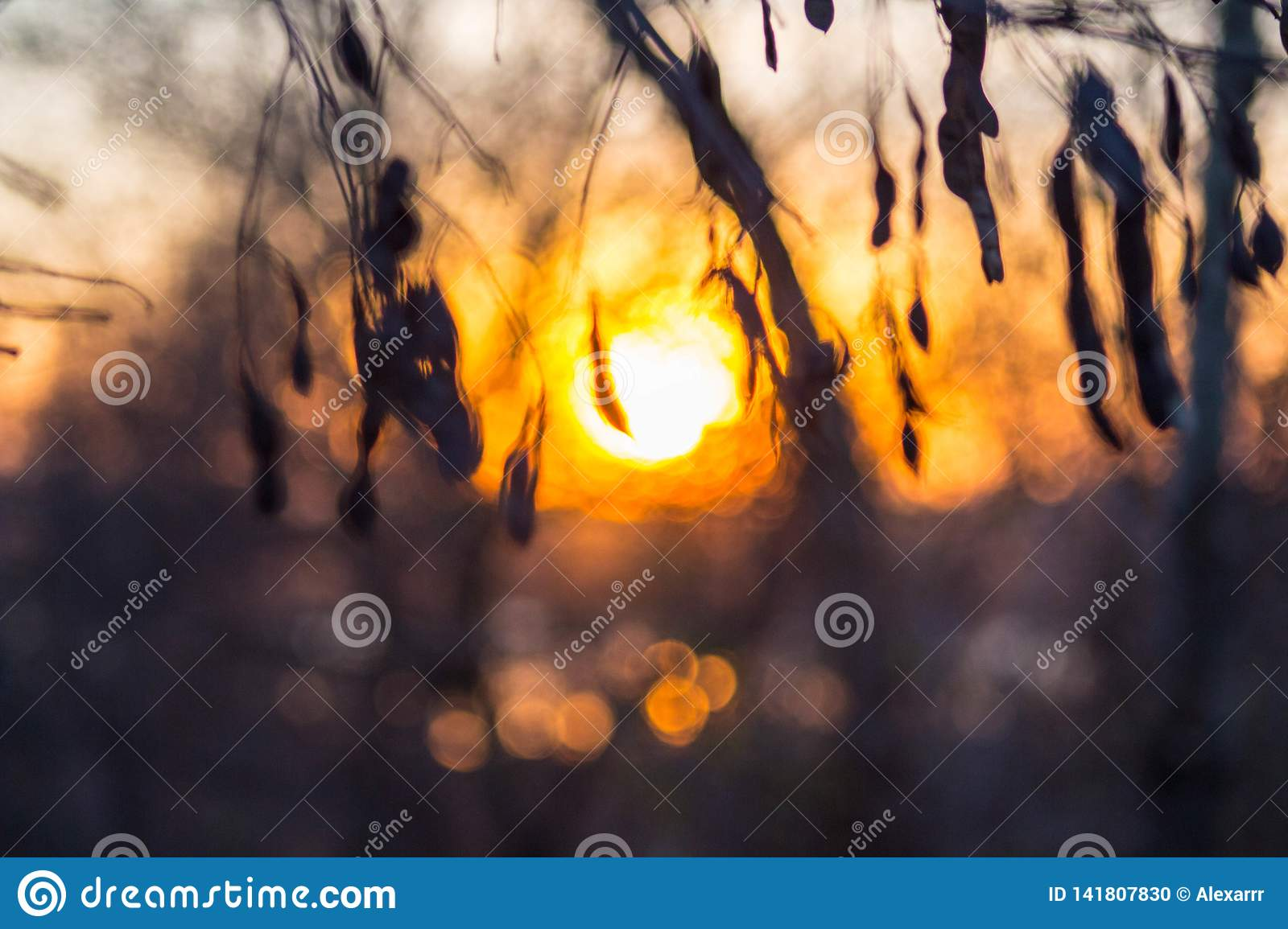 Beautiful sunset on the background of the forest