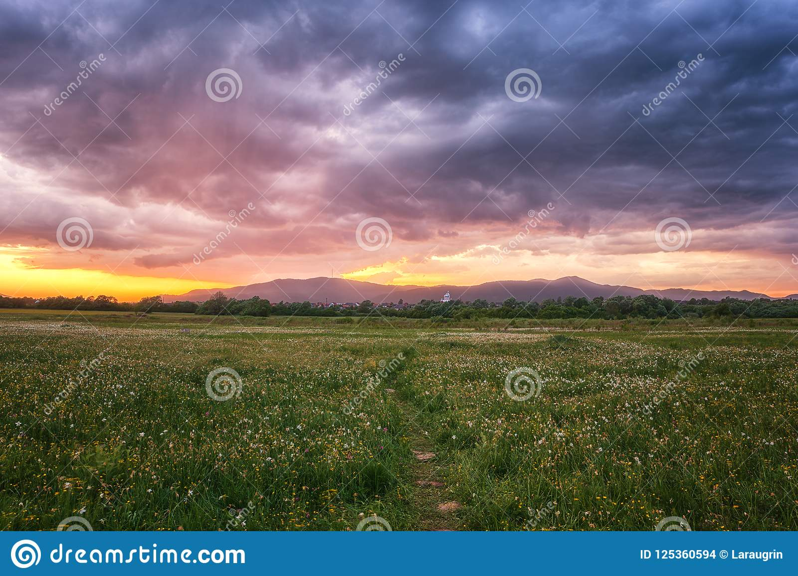 Beautiful sunset in the flowering valley, scenic landscape with wild growing flowers and color cloudy sky