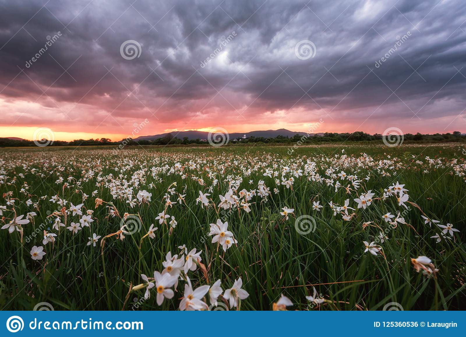Photography scenery amazing sunset flower pretty picturesboss beautiful sunset flowering valley scenic landscape wild growing white flowers dramatic thunder beautiful image jpg 1600x1156 izmirmasajfo