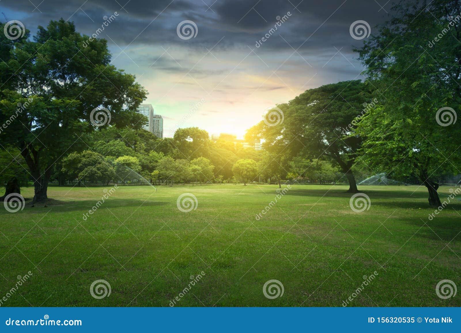 Beautiful sunset in the Lumphini Park in Bangkok, Thailand