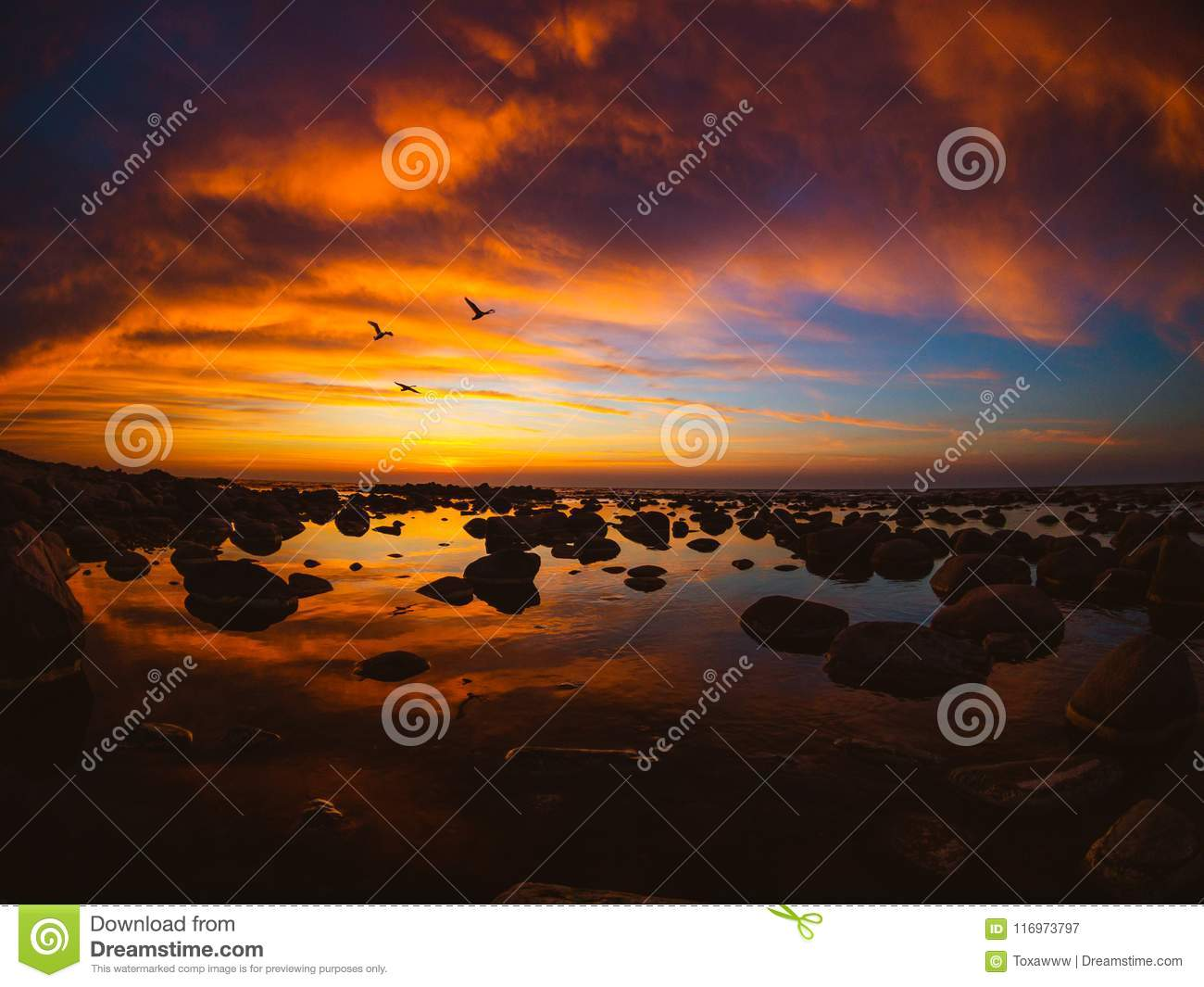 Beautiful sunset at sea side with flying swans