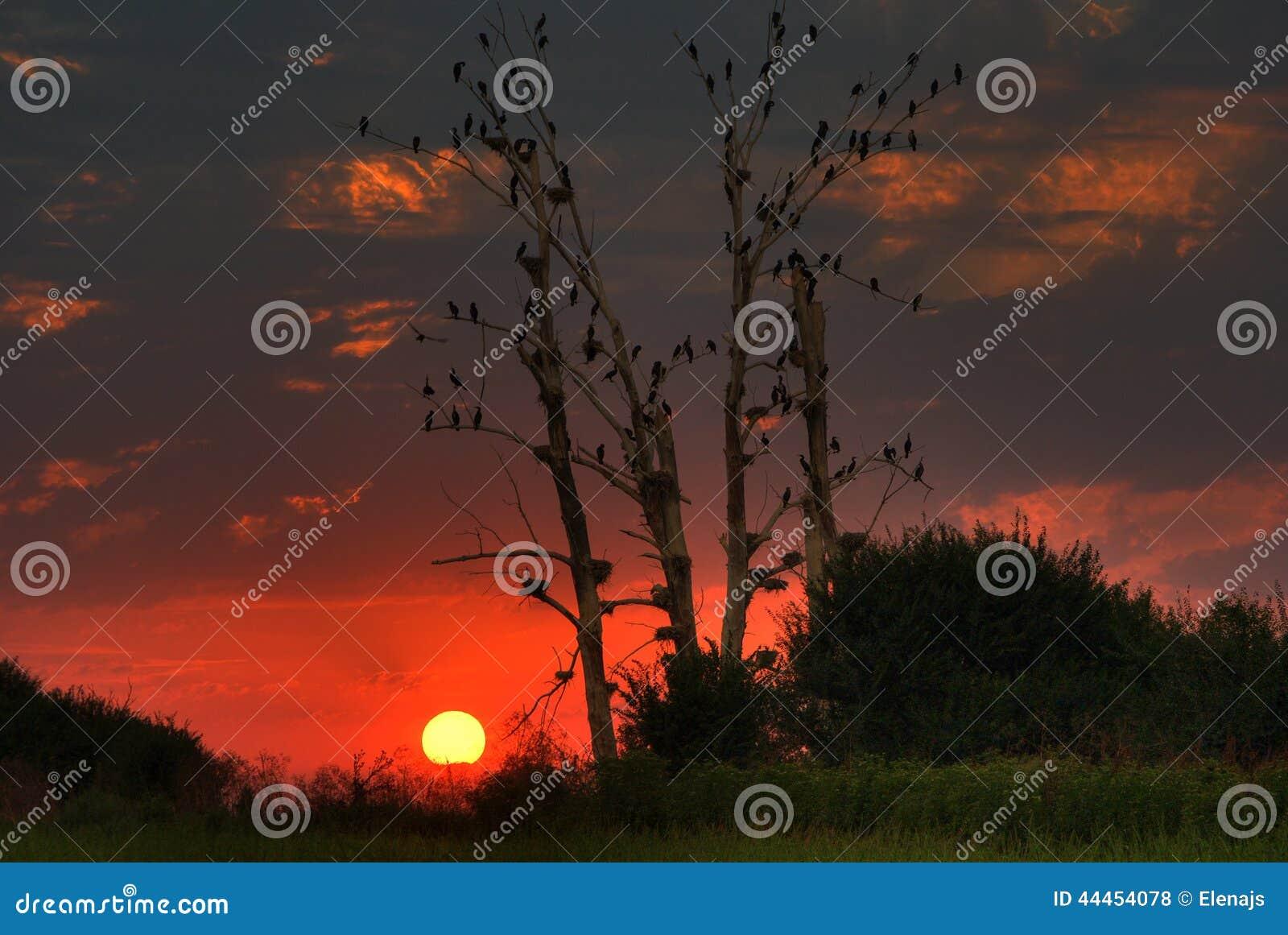 Beautiful sunset with sleeping birds
