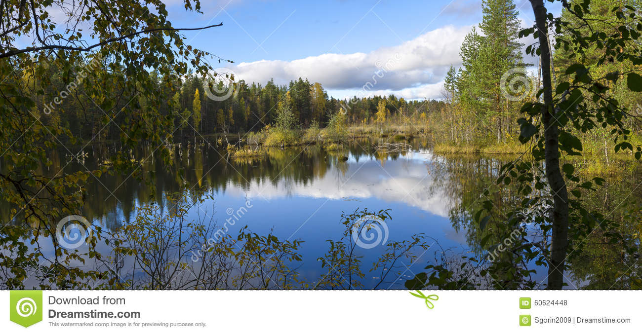 Download Beautiful Swamp In Nothern Taiga Stock Photo - Image of mirror, calm: 60624448