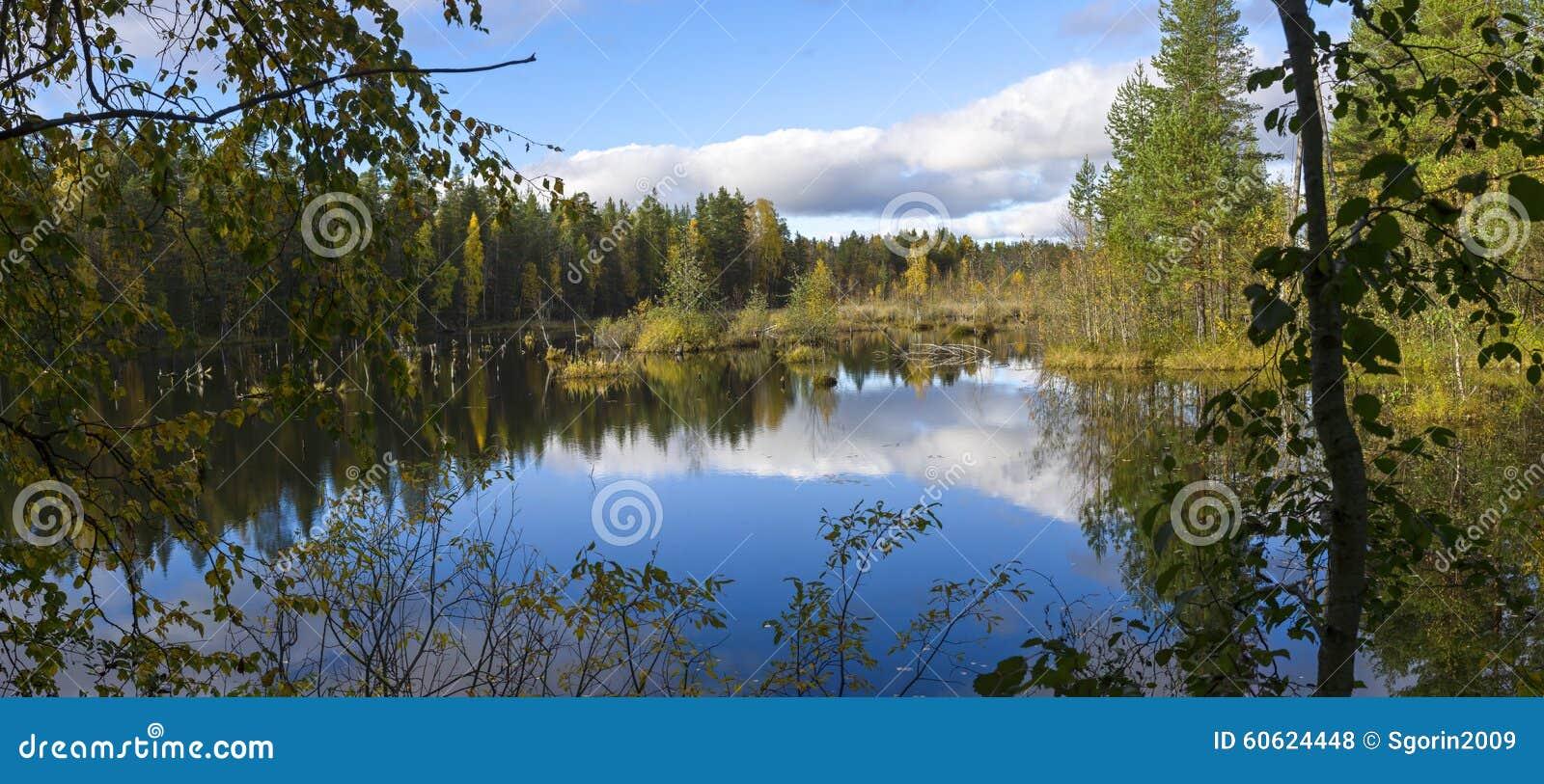 Beautiful swamp in nothern taiga