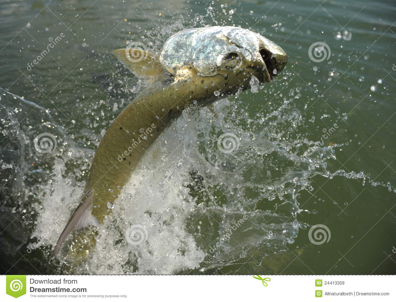 Tarpon fish and lure vector design vector illustration for Dream about fish out of water