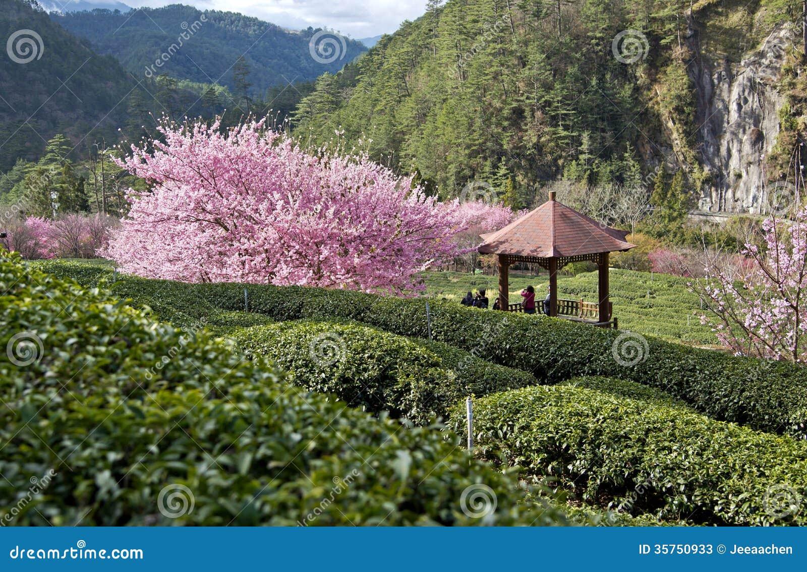 Beautiful Natural Tea