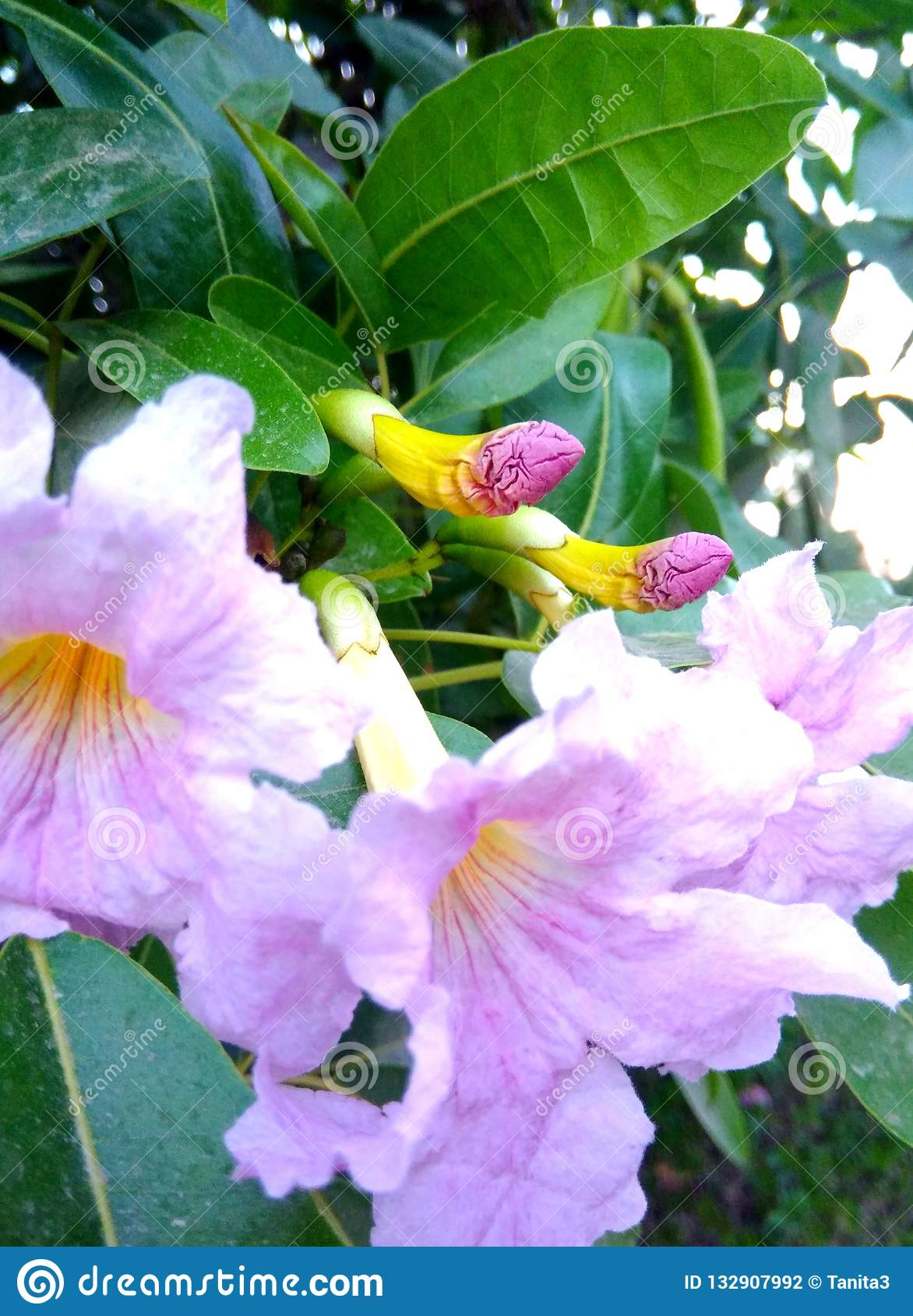 Pink flowers on a flowering tree
