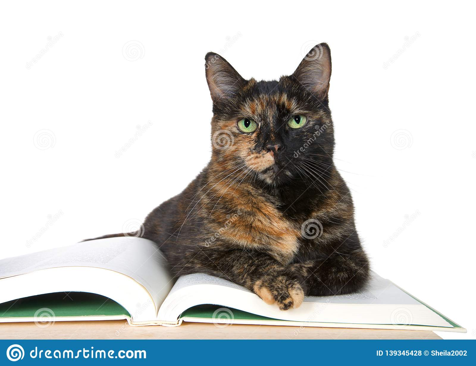 Beautiful Tortoiseshell cat with green eyes, laying on a story book