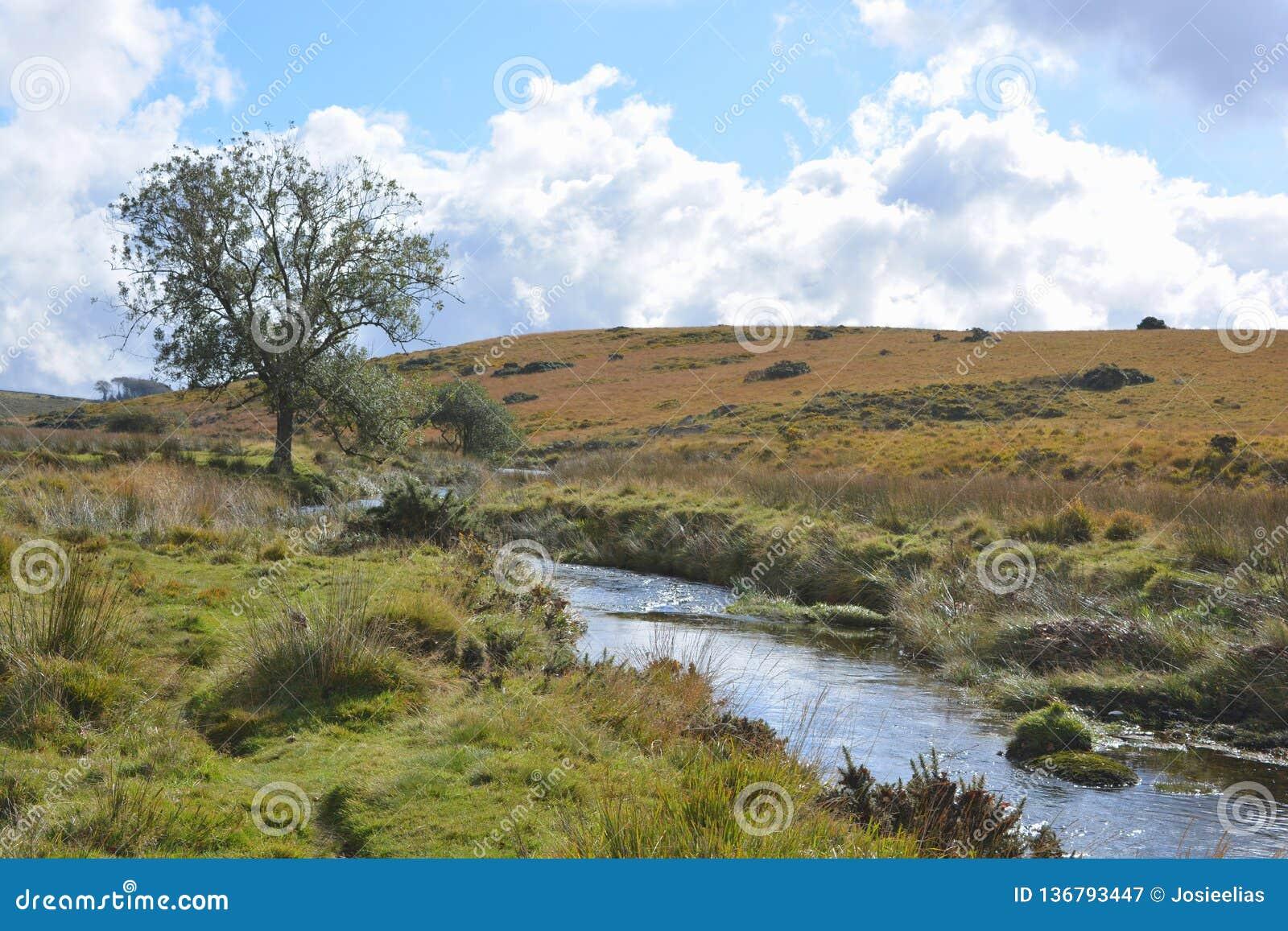 West Dart River near Two Bridges, Dartmoor National Park, Devon, England