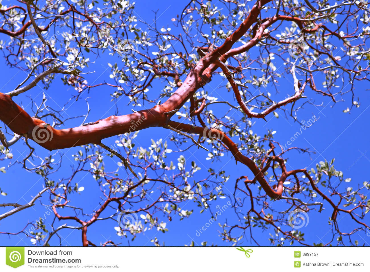 Beautiful Tree Branch stock image. Image of outdoors, post ...