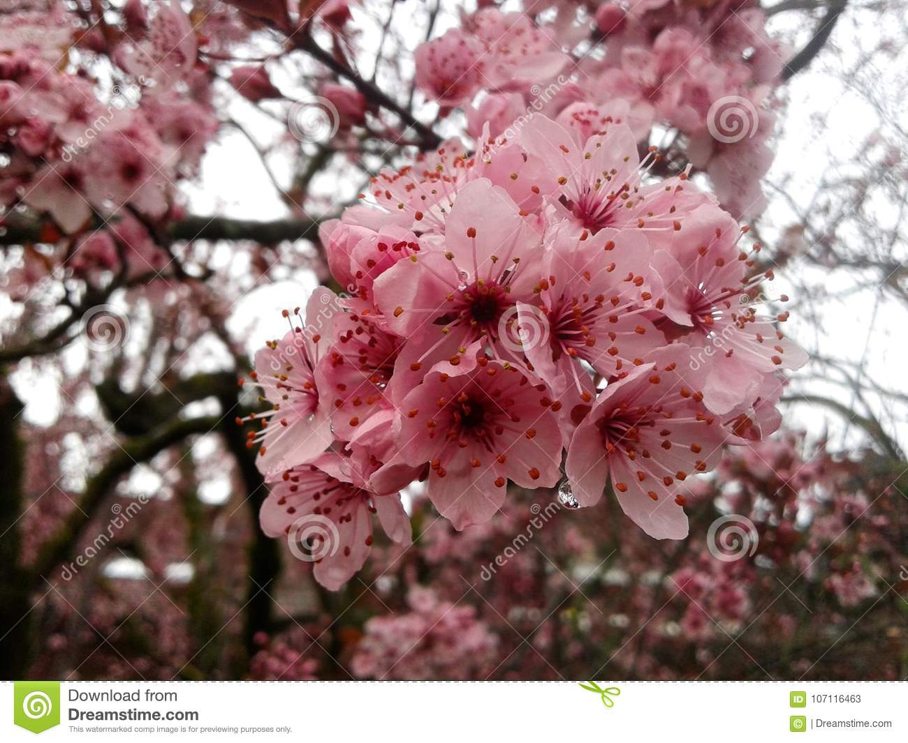 Beautiful Tree With Flowers On Sky Background Stock Image Image Of
