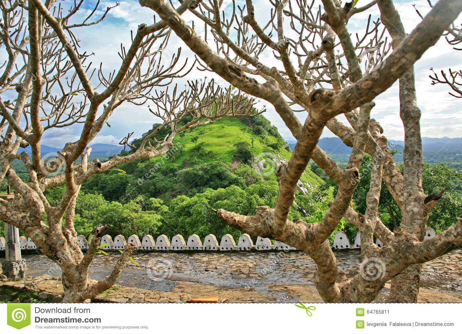 Beautiful trees and plants around Dambulla Temple, Sri Lanka