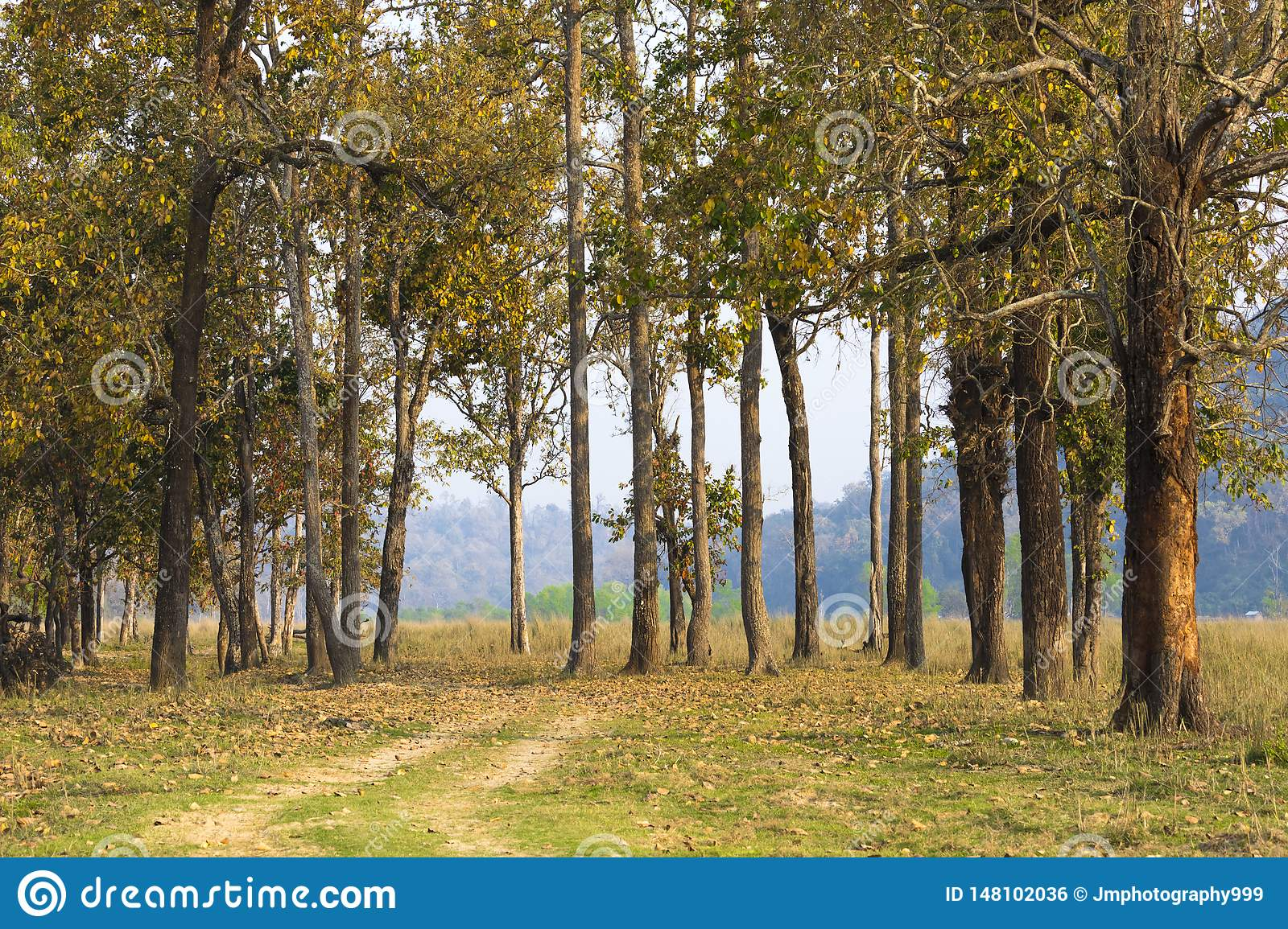 A beautiful view,group of Trees in chitwan National park Nepal